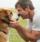Dennis Quaid in A Dog's Purpose
